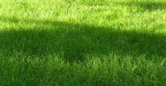 Wiese Gras