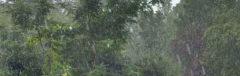 Wolkenbruch Regen