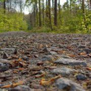 Waldweg Nahaufnahme Steine